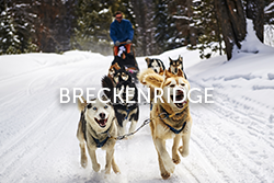 Breckenridge Sled Dogs Colorado