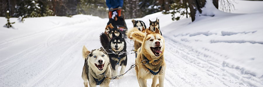 Dog Sledding Breckenridge CO | Things to do in Breckenridge