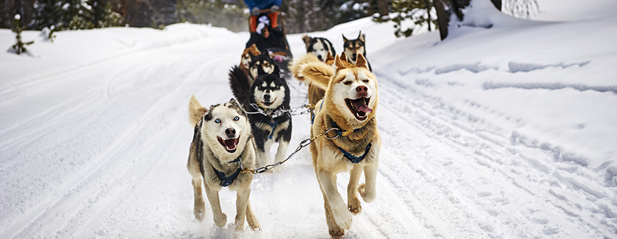 Keystone Dog Sledding