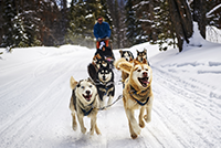 Dog Sledding Silverthorne Winter